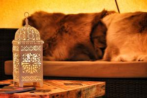 winter-tipi-wedding-table-lamp